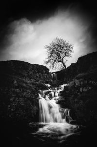 – waterfall and tree –