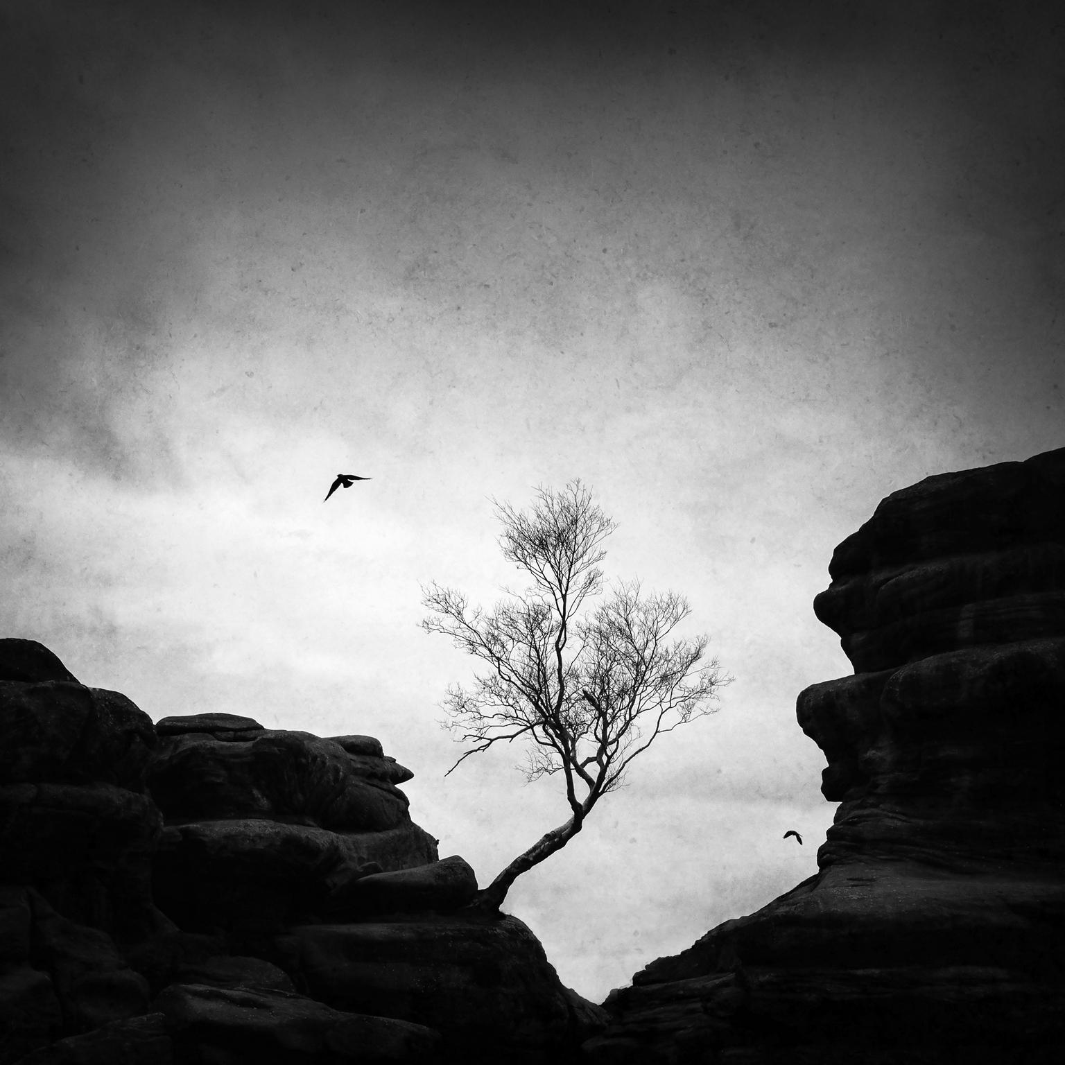 – solitude i