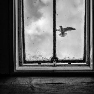 – bird in attic window –